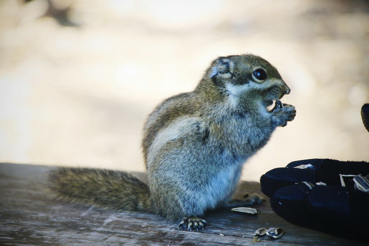Cropped Hand With Food By Chipmunk On Wood