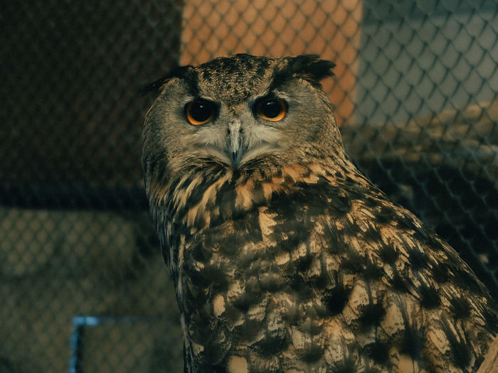Close-up portrait of owl in zoo