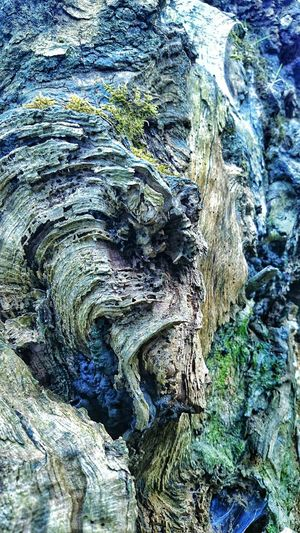 Closeup of petrified wood from the split in the tree trunk. You can see so many things in the curves of the wood. A face agasp, or a woman trapped on the right lookng out Nature Textured  Wood Tree Backgrounds Outdoors Petrified Tree Petrified Petrified Wood Blue