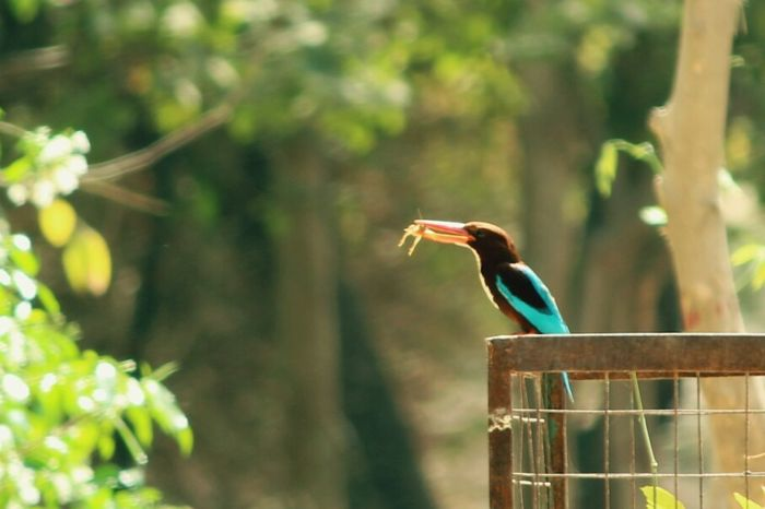Kingfisher Bird Photography Capture The Moment Kingfisher Bird Check This Out Lizard Hunting Freedom Of Expression Birds In Wild Blue Kingfisher