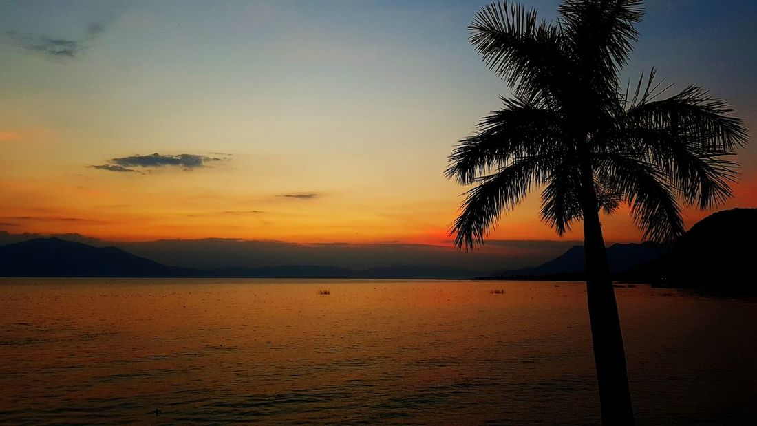 Chapala Lake Lake Red Color Orange Color Water Sunset Palm Tree Tree Silhouette Beach Travel Tranquility