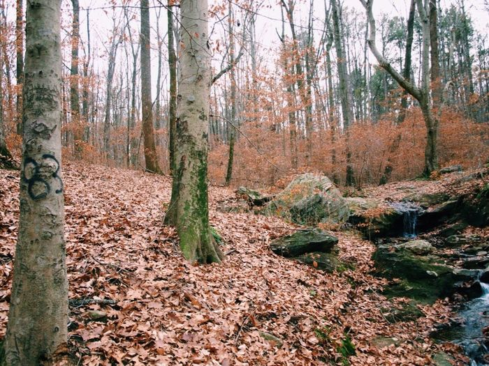 Travel Traveling Travel Photography Tranquil Scene Tranquility Wood Woods Nature Nature_collection Nature Photography Water Georgia United States Vscocam VSCO Vscogood VSCO Cam Beautiful Happy Followme Relaxing Taking Pictures Enjoying The View Trees Graffiti