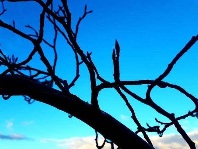 Tree Branch Blue Sky Plant Silhouette Outline Calm Cloud Sunset