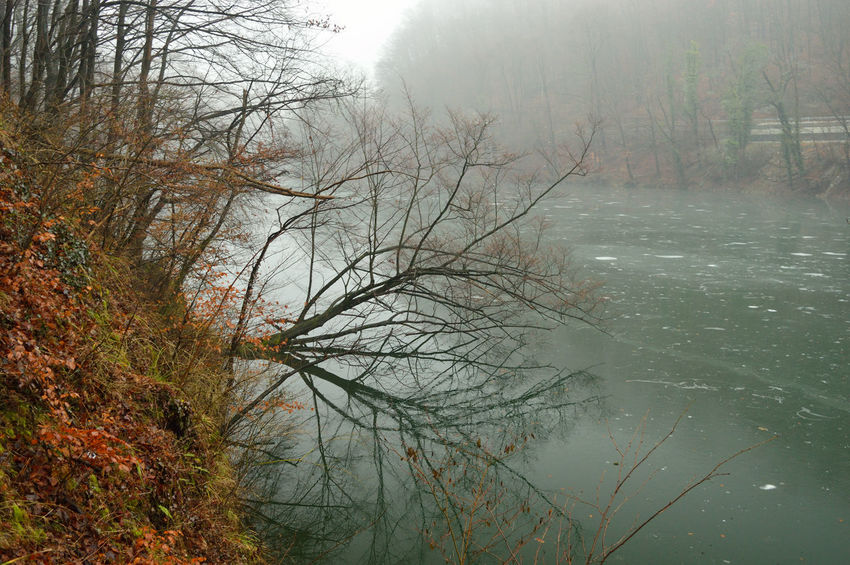 Tree on the lake Bare Tree Beauty In Nature Cold Temperature Day Fog Forest Lake Landscape Mist Nature No People Tranquil Scene Tranquility Tree Water Winter
