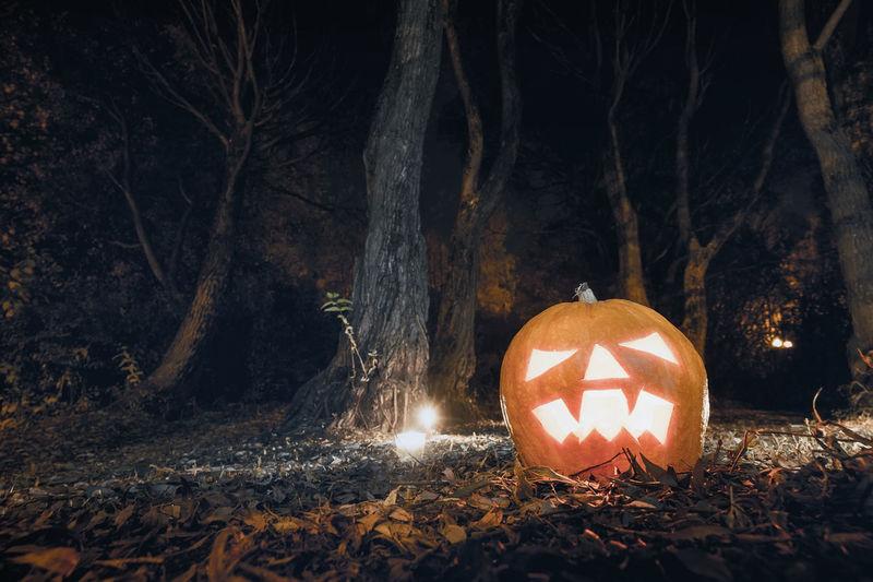 Close-up of illuminated pumpkin against trees at night