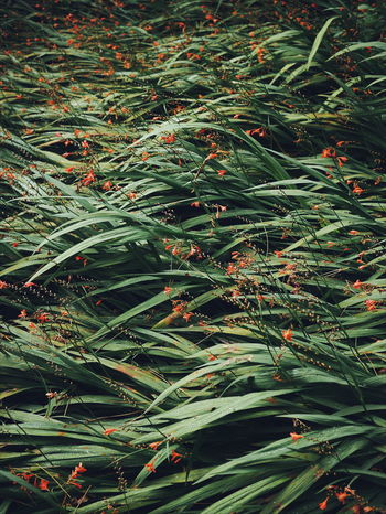 Plants And Flowers Green Plant Nature Minimalism Arboretum Genk Bokrijk Colors and patterns The Great Outdoors - 2017 EyeEm Awards Perspectives On Nature