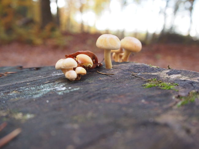 Beauty In Nature Close-up Day Focus On Foreground Freshness Fungus Mushrooms Nature No People Outdoors Surface Level