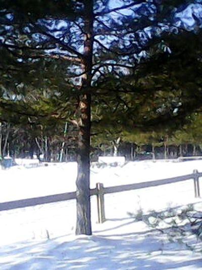 зима First Eyeem Photo