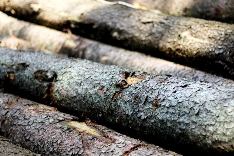 Tree Logger Log Faller Timber Lumber Industry Wood Textured  Rusty Backgrounds Close-up Forestry Industry Woodpile Bark Moss Rough Tree Ring Tree Stump