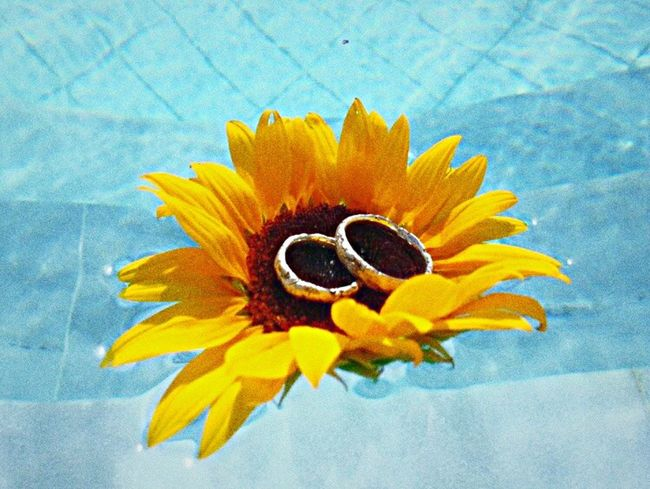 Wedding Rings Sunflower Greece Happy Happiness Summer Sun