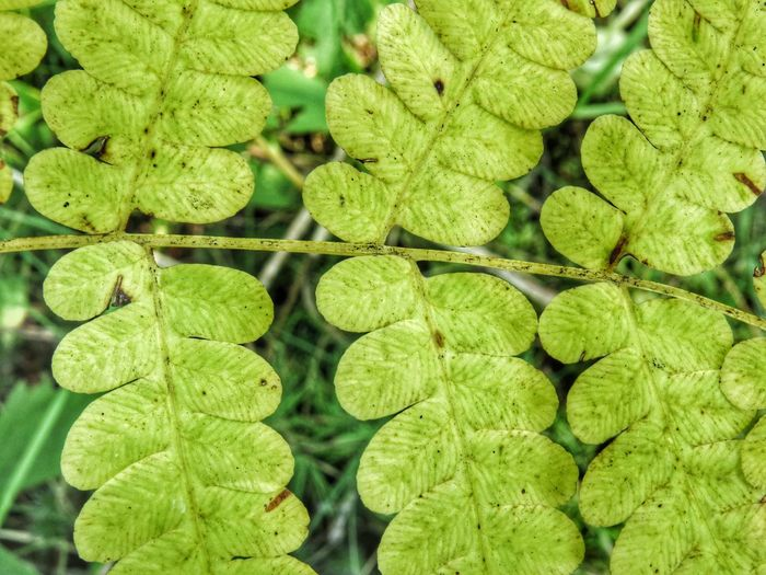 Fern Green Color Full Frame Backgrounds Nature Day No People Plant Plant Part Leaf Growth Close-up Beauty In Nature Outdoors Directly Above Leaves Sunlight High Angle View Abundance Pattern