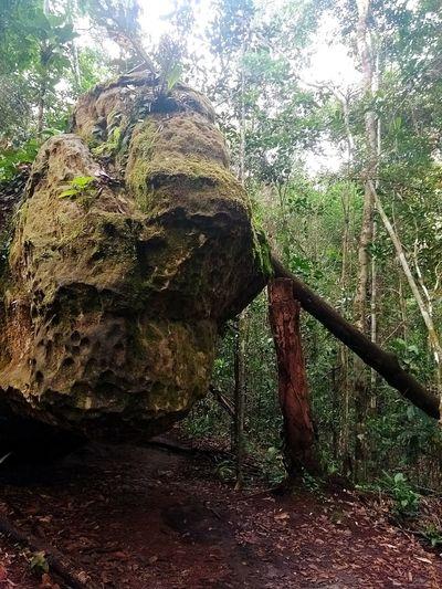 Nature Forest Beauty In Nature Beauty In Nature