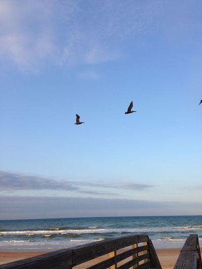 Beach Sea Bird