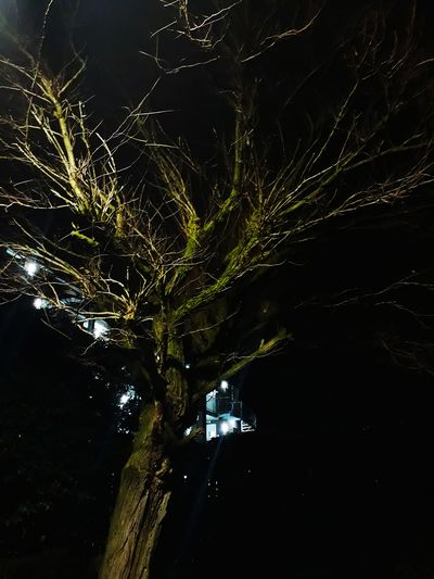 You are hidden, but I found you anyway. City By Night Lights Nightlights Night No People Tree Outdoors Nature