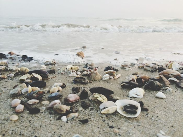 Seashells And Mussels On Shore At Beach