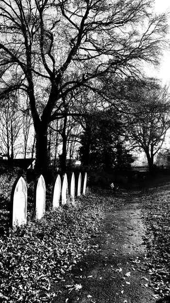 path Photowalktheworld Cemetery Black And White Cemetery Wanderings Tree Branch Silhouette Bare Tree Sky Creeper Focus On Shadow Long Shadow - Shadow