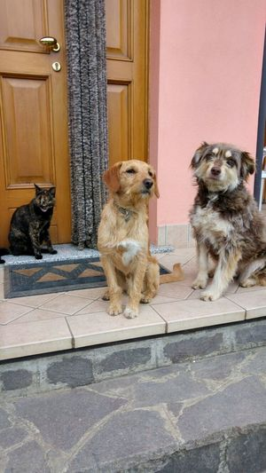 Animal Themes Cats Cute Family Dog Domestic Animals Love Loyalty Pets Puppy Love