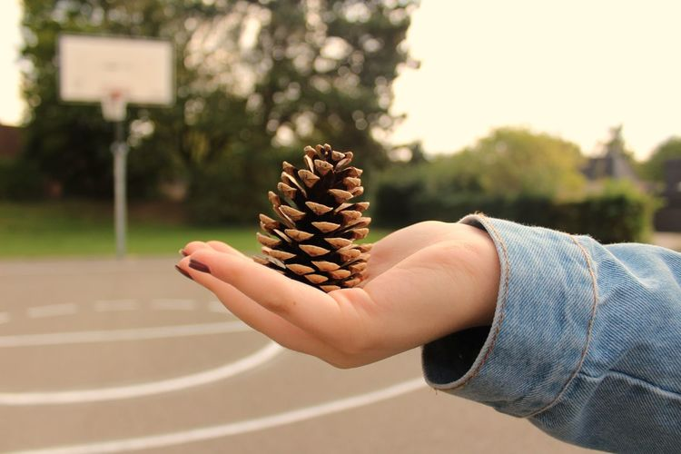 Cropped Hand Of Woman Holding Pine Cone