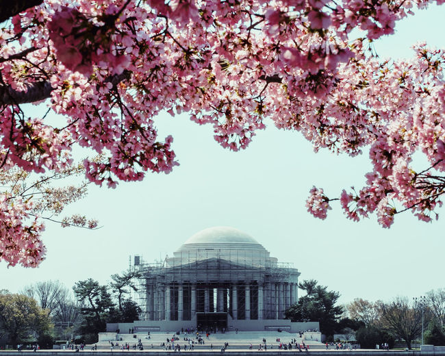 View of cherry blossom tree with buildings in background