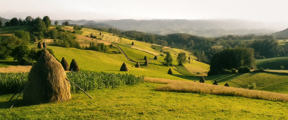 Somewhere in the Bihor Mountains, Romania Agriculture Bihar-hegység Bihor Mountains Corn Countryside Farm Farming Field Grass Grassy Green Hills Idyllic Landscape Nature Physical Geography Rural Tranquility Vivid Bale  Straw Peaceful Daylight Non-urban Outdoor