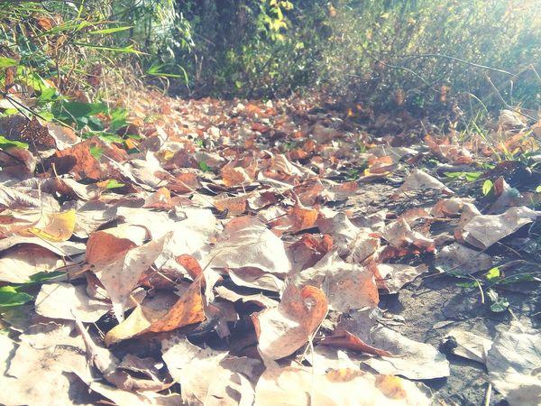 Золотая осень осеньвгороде осень прекрасна 🌾🍂🍃 природа и красота листья желтые настроение осень First Eyeem Photo