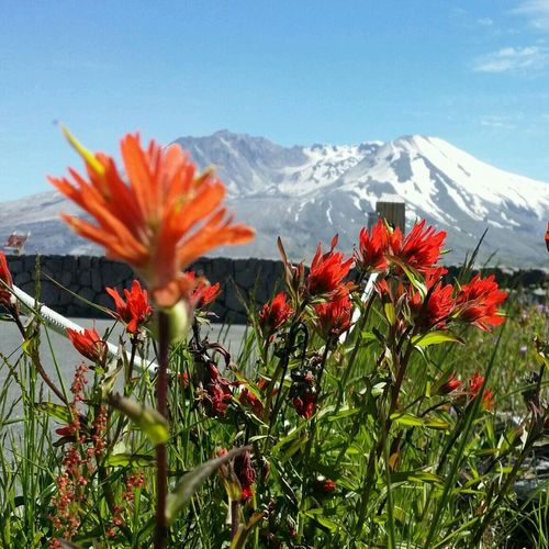 The Explorer - 2014 EyeEm Awards Washington State Mt. St. Helens  Mountain View