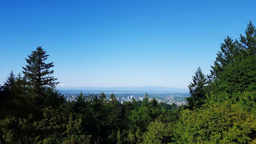 Council Crest park Enjoying The Sun Escaping Hugging A Tree View I See Portland Portland Pdx Soaking Up The Sun