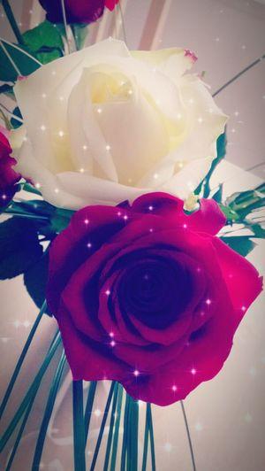Rose - Flower Rose🌹 Amour ❤ Flower Chéri Pacs