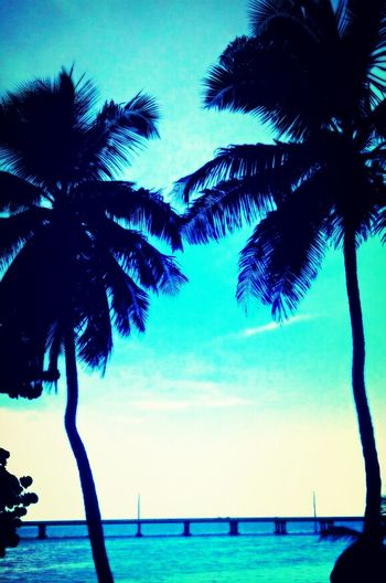 Beach Paradise Palm Trees Keys