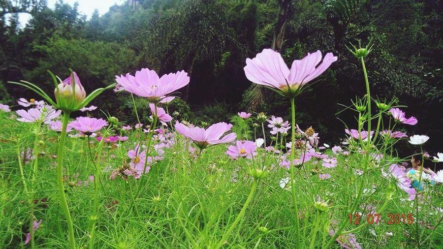 taken by cousin Flowers