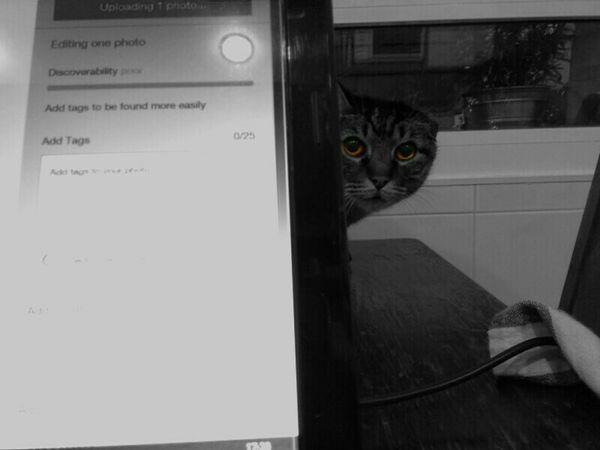 EyeEm Eyeem Market Upload Cat