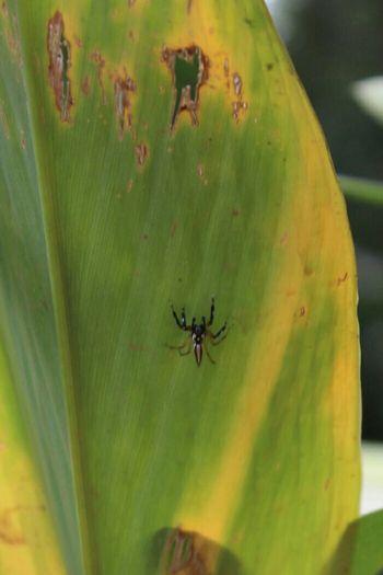 Aranha Arachnid Aracnideos Spider Insects  Inseto Nature Natureza