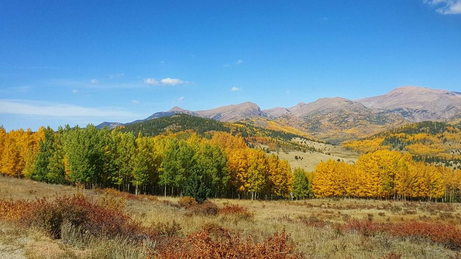 Check This Out Colorado Colorful Fall Color Fall Leaves Aspens Mountains Samsungphotography Samsung Galaxy S6 Edge