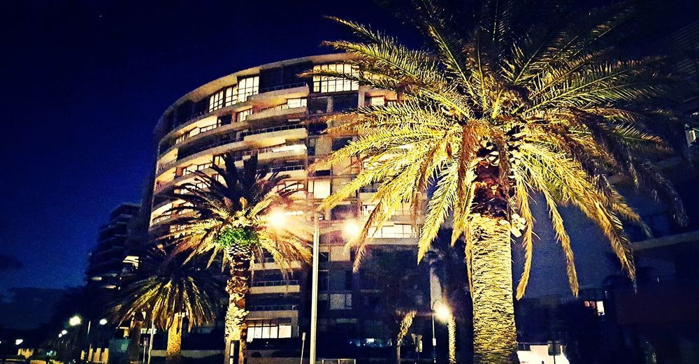 Port Melbourne Streets With Palm Trees LA Feels Beachside Apartments With Views Last Days Of Good Weather Autumn Colors The Great Outdoors With Adobe The Street Photographer - 2016 EyeEm Awards Battle Of The Cities