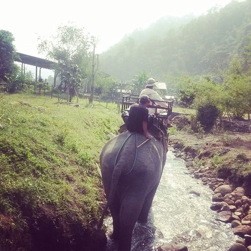 Elephant trekking in Thailand..... , Thailand , Inthejungle , Lazyriver , Bamboorafting , lovingit , livingmylife , lovinglife , lovethisday , letsgetlost , living , thiswasagoodday , YOLO , blessed