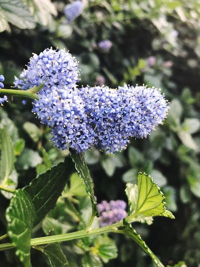 Check This Out Nature Flower Growth Lilac Day Focus On Foreground Flower Head