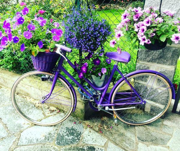 Transportation Plant Flower Purple