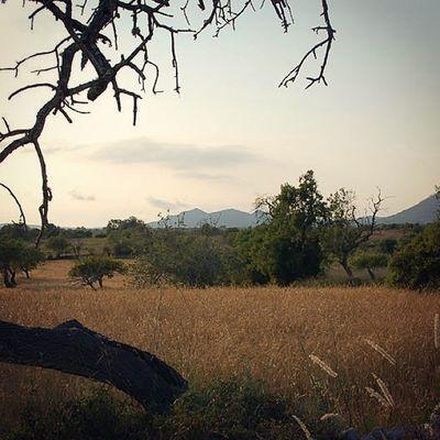 Palma de Mallorca as seen from Finca Son Estrany Sundown Malloca Chillout
