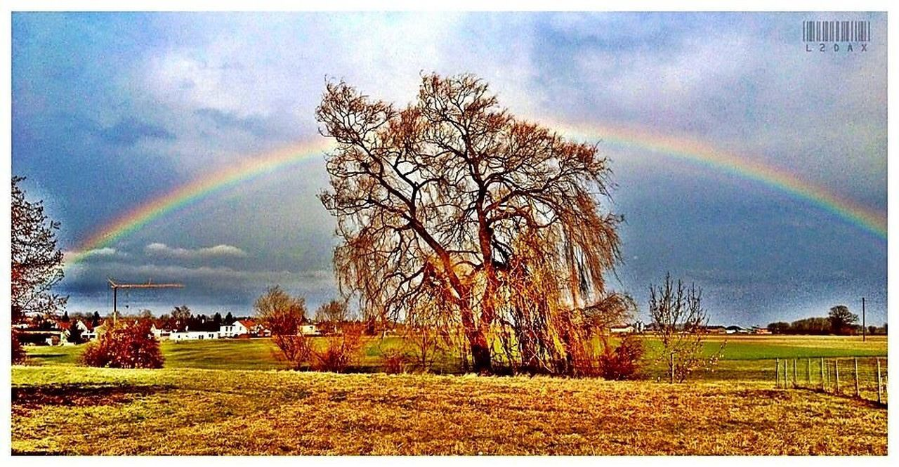 rainbow, double rainbow, beauty in nature, tranquility, scenics, tree, nature, tranquil scene, idyllic, bare tree, landscape, day, field, sky, weather, outdoors, no people, multi colored, grass, spectrum