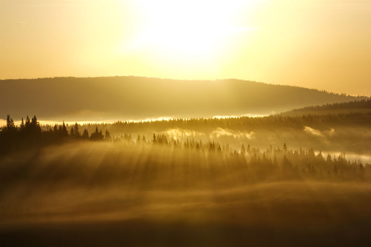 Beauty In Nature Fog Forest Landscape Light Magic Morning Nature No People Outdoors Russia Scenics