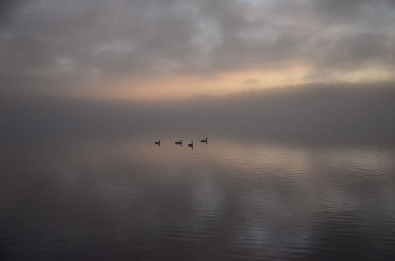 Water Sky Animal Animal Themes Animal Wildlife Cloud - Sky Animals In The Wild Scenics - Nature Tranquility Sea Tranquil Scene Sunset Vertebrate Nature Beauty In Nature Reflection Bird No People Group Of Animals Horizon Over Water Outdoors Romantic Sky New Years Day 2019 My Best Photo