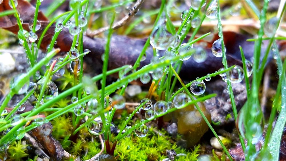 Growth Nature Green Color Plant Outdoors No People Leaf Day Spider Web Beauty In Nature Close-up Tree Freshness Macro Macro Beauty EyeEm Best Shots Waterdrops Droplets Water Reflections Galaxys6 Drop Reflections My Unique Style Macro Water Drops Beauty In Nature