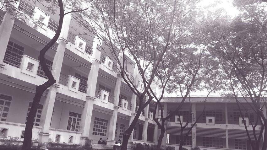 MySchool Blackandwhite Trees And Sky