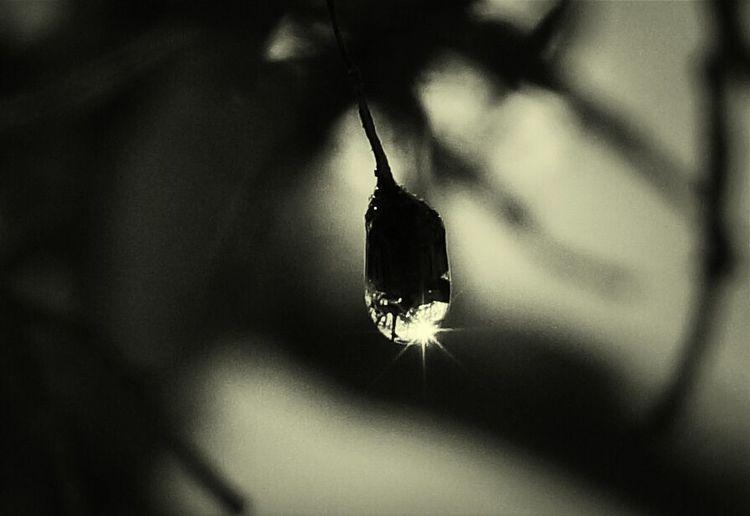 Black And White Gotas Drops
