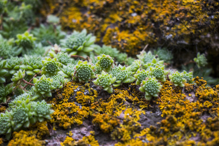 High angle view of moss growing on plant