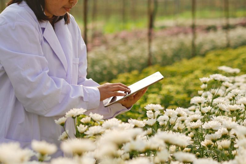 The scientists in white laboratory coat using tablet in Chrysanthemum farm fields. Agriculture Laboratory Herb Insecticide Experimental Scientist Information Searching Tablet Plant Growth Flower One Person Nature Flowering Plant Beauty In Nature Field Holding Adult Land White Color Writing Women Environment Occupation Note Pad