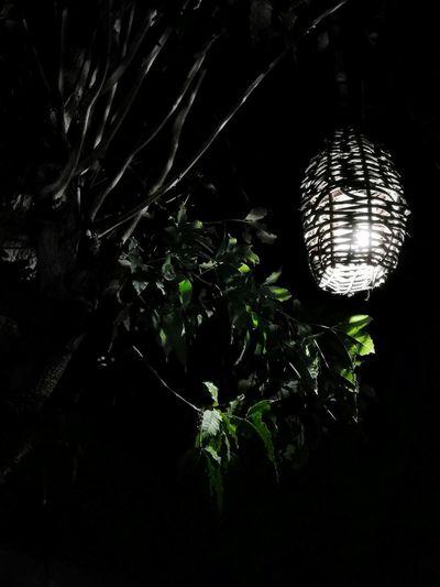 🎐 Illuminated
