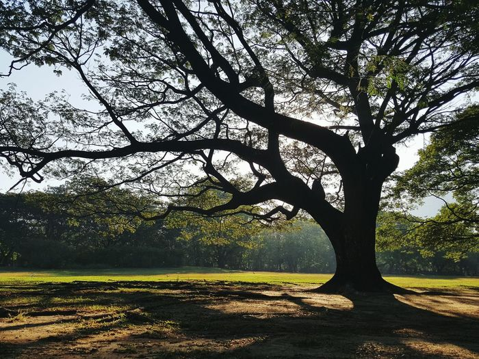 Tree Nature Scenics No People Landscape Outdoors Sunset Tranquility Beauty In Nature Tranquil Scene Sky Day Single Tree