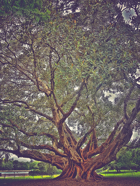 Nature Tree Nature's Diversities Tree Growing HDR Green