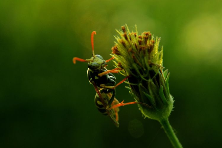 Close-up of wasp on plant